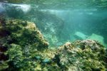 Seeing the tropical fish Snorkeling in Cozumel